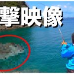 【衝撃】とんでもない魚を釣り上げてしまいました・・・【釣りよかコラボ】