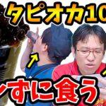 【ドッキリ】ゲーム中にバレずにタピオカ100粒食べられるのか!?